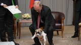 Putin's puppy: Russia's dog-loving leader gets a furry gift