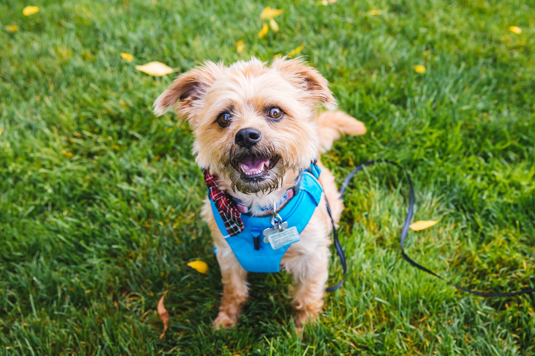 "Memphis is a 4-year-old terrier mix who loves cuddles, car rides, playing fetch & hide and seek. But he's not a big fan of taking a bath or lots of noise!{&nbsp;}<a  href=""http://seattlerefined.com/ruffined"" target=""_blank"" title=""http://seattlerefined.com/ruffined"">The RUFFined Spotlight</a>{&nbsp;}is a weekly profile of local pets living and loving life in the PNW. If you or someone you know has a pet you'd like featured, email us at{&nbsp;}<a  href=""mailto:hello@seattlerefined.com"" target=""_blank"" title=""mailto:hello@seattlerefined.com"">hello@seattlerefined.com</a>, and your furbaby could be the next spotlighted! (Image: Sunita Martini / Seattle Refined)"
