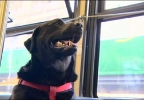 Dog Takes Bus To Dog Park By Herself Ktul