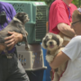 Dozens of dogs rescued in animal hoarding case in Murray County