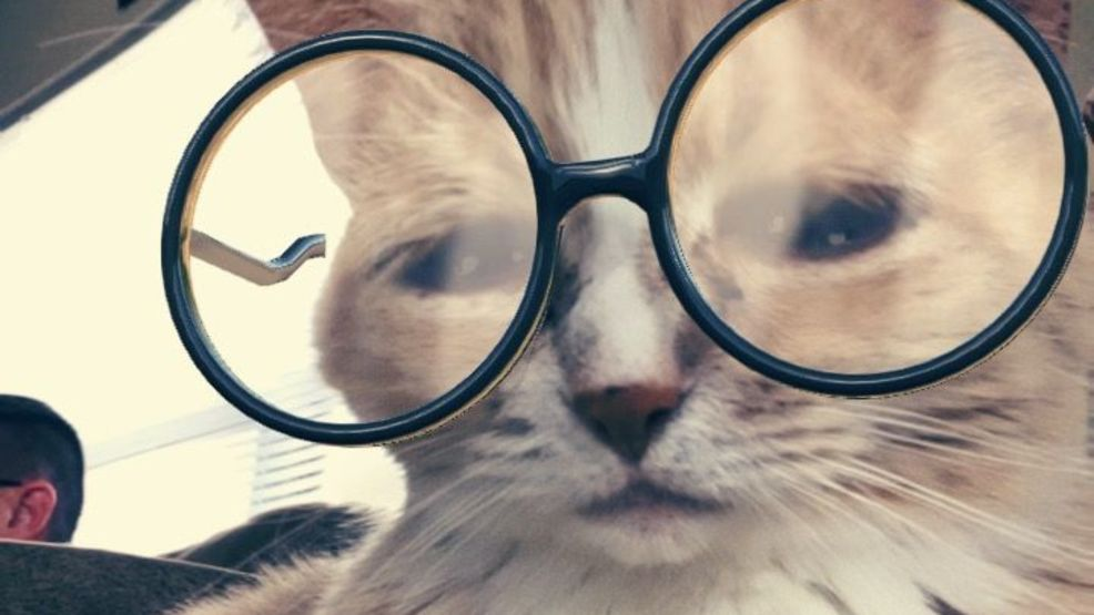 Smarty Cat!