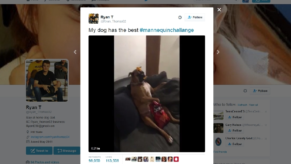 Dog Pulls Off The Best Mannequinchallenge You Ll Ever See