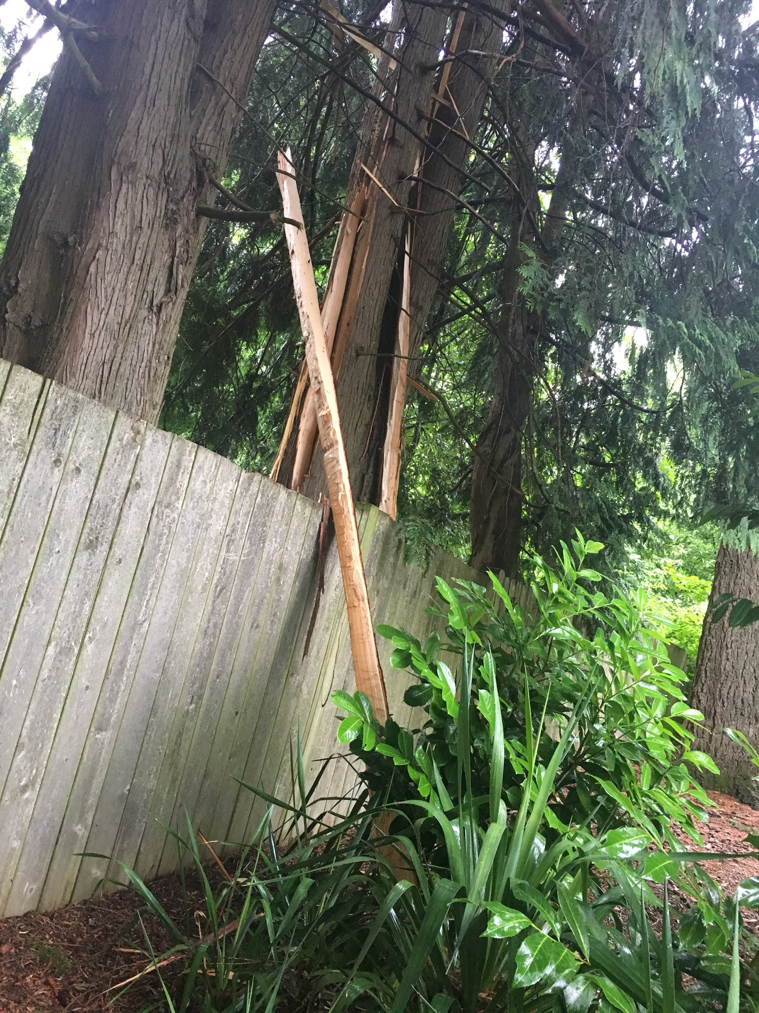 Storm damage in Southwest Portland photo by Genevieve Reaume