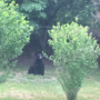 Black bear sighted in Westerly