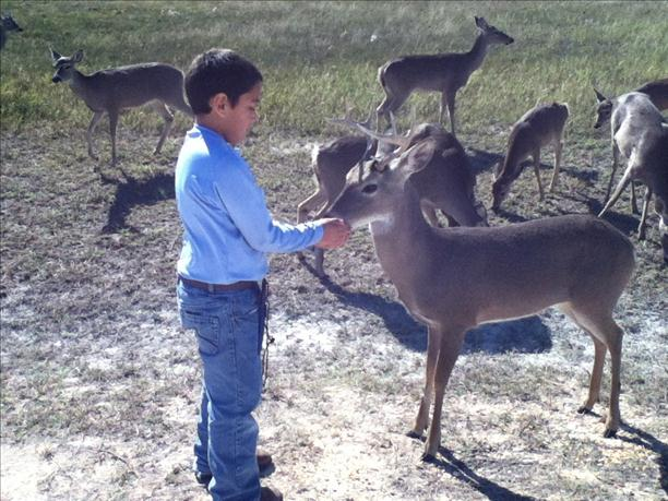 <a  href=&quot;http://share.valleycentral.com/Media/View/3004460&quot;>Feeding The Deer</a>
