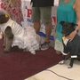 Wedding of the Century? Two dogs get hitched in Brighton