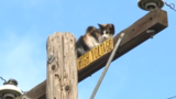 Cat passes away following attempted rescue from electric pole