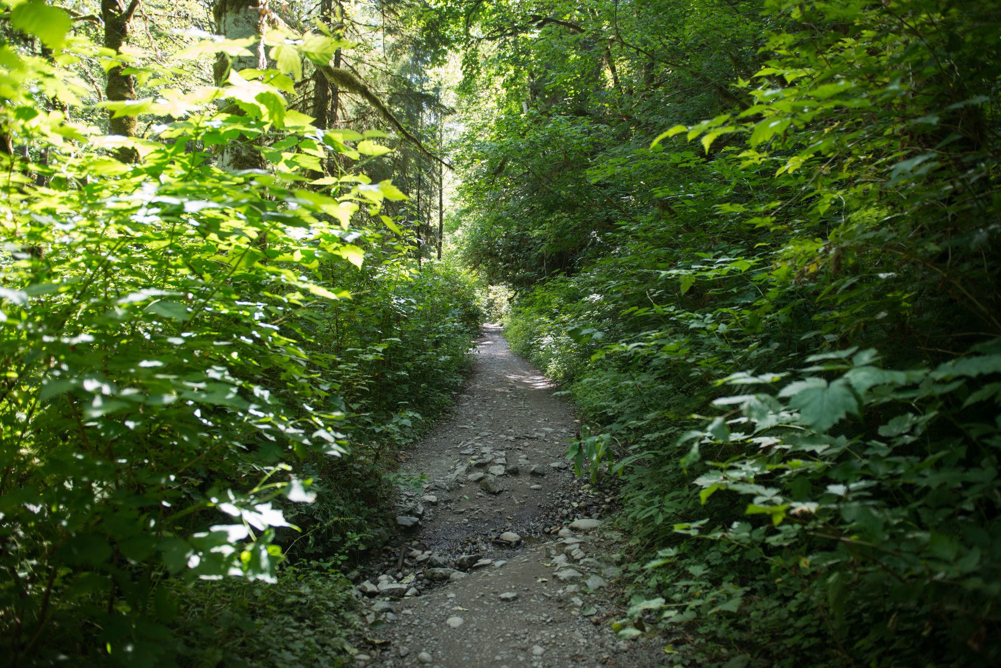 Fun fact: the trailhead for a hike that will straight up transport you to Ferngully is just under 60 miles northwest of Seattle.  It's two miles to the 1,328 foot waterfall from the parking lot (four miles roundtrip) and rest assured you will be in awe. The waterfall flows from the aptly named Lake Serene and streams down a 100 foot rock face in a strong, yet languid manner (could it be a metaphor for love?!) that can only be described as a bridal veil. You'll feel like a million bucks with the falls gently spraying your face after the journey, which starts off easy but increases in difficulty a bit as you ascend to the last quarter mile of the hike. We took the hike last week, click on for photos! (Image: Chona Kasinger / Seattle Refined)