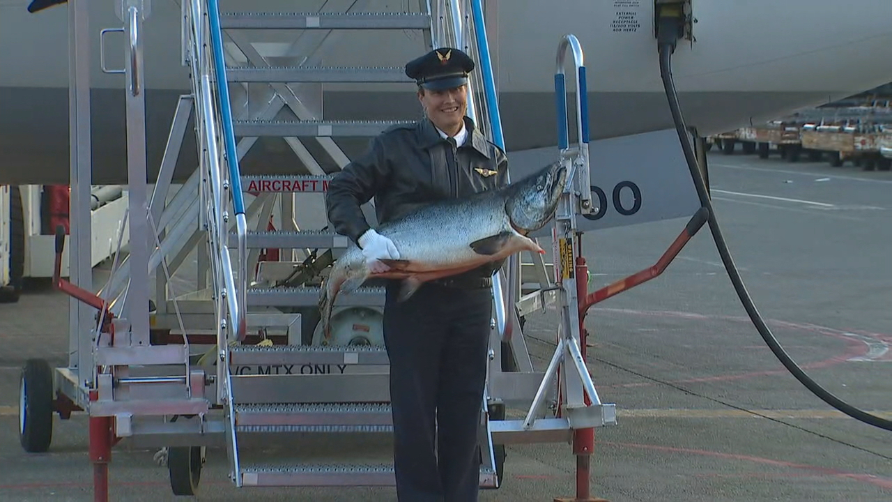 Alaska Air First Officer Melissa VanDyke carried the first salmon out onto the tarmac to the waiting crowd at Sea-Tac Airport on May 19, 2017.  (Photo: KOMO News)