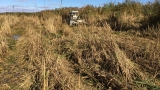Phragmites cutting in Green Bay