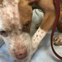$500 reward offered in animal cruelty case in Chattanooga