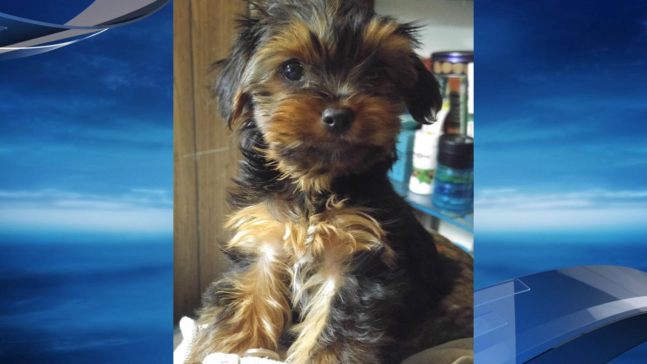 The Washington County Sheriff's Office is searching for the person who stole a vehicle from St. Vincent Medical Center. They found the vehicle on April 4, but the puppy is still missing.  Photo courtesy Washington County Sheriff's Office