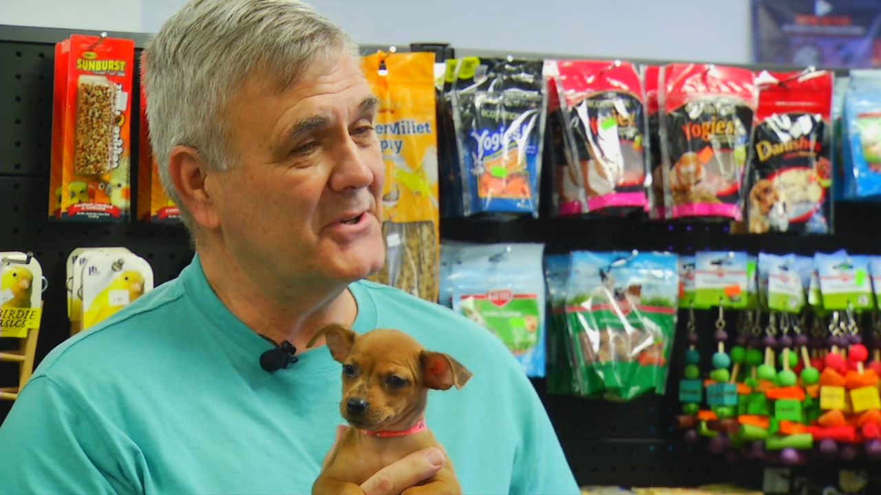 Sylva pet store is helping shelter animals find homes with for Fish and more pet store