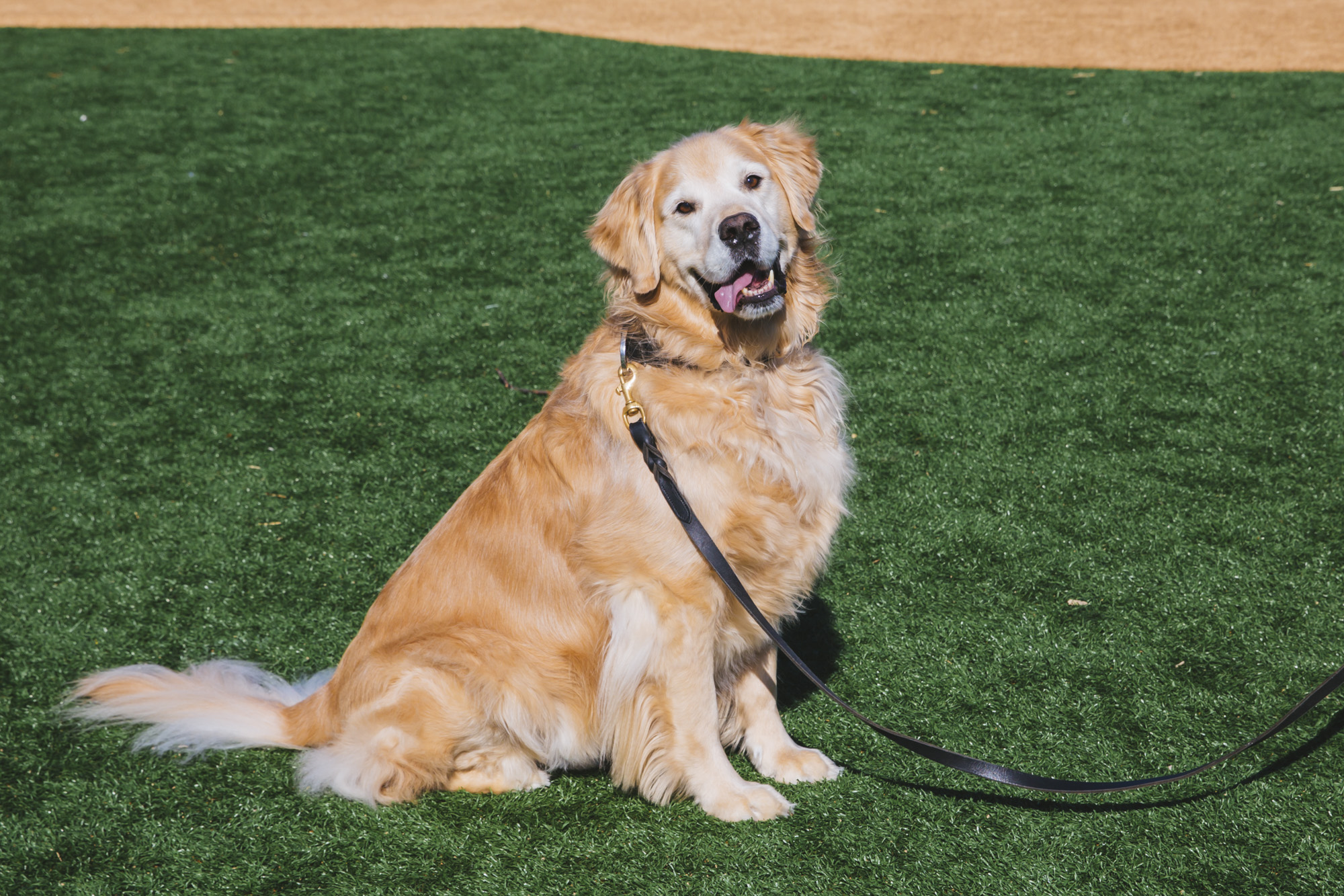 This weeks RUFFined Spotlight is Bailey the eight-year-old Golden Retriever! Bailey is a born and raised Washingtonian and is the grandson of a Westminster Sporting Group winner and has dabbled himself in dog shows, 4H and modeling. He likes treats (especially popcorn), cheese, freeze dried fish, snow, going to the dog park, chasing tennis balls and frisbees, dock diving and swimming, fetching socks for attention, supervising squirrels and back massages. He dislikes the bear at the Brown Bear Car Wash, has been known to give the stink eye to foster cats and small dogs that jump on the couch and being leashed on a beautiful beach.{ } The Seattle RUFFined Spotlight is a weekly profile of local pets living and loving life in the PNW. If you or someone you know has a pet you'd like featured, email us at hello@seattlerefined.com or tag #SeattleRUFFined and your furbaby could be the next spotlighted! (Image: Sunita Martini / Seattle Refined).